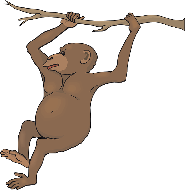 Swinging panda free images. Monkey clipart climb