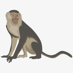 Png cliparts cartoons free. Monkey clipart monky