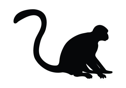 Monkey clipart stencil. Pin on animal silhouettes