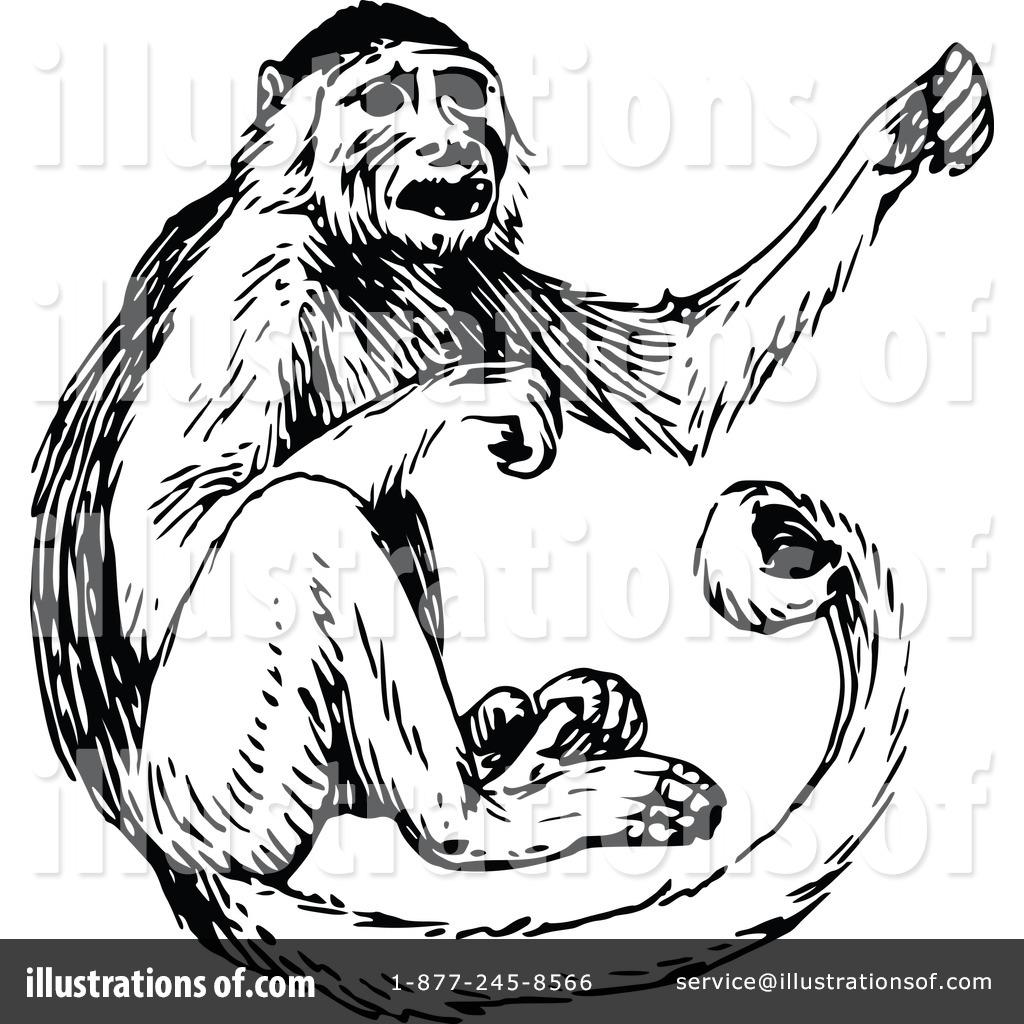 Illustration by prawny . Monkey clipart vintage