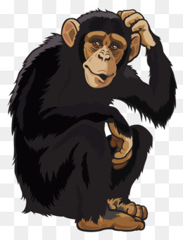Monkeys clipart chimpanzee. Download free png ape