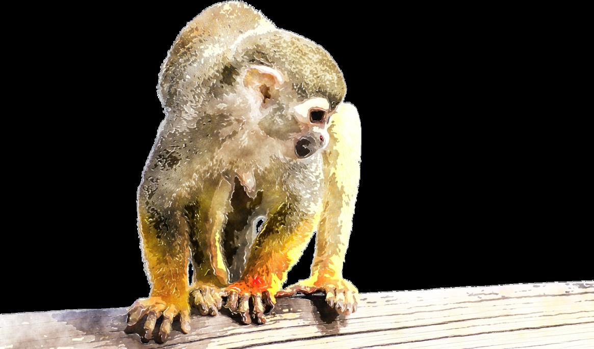 Monkeys clipart watercolor. Monkey by lavandalu on