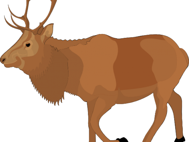Moose clipart carton. Bozrah lodge free download