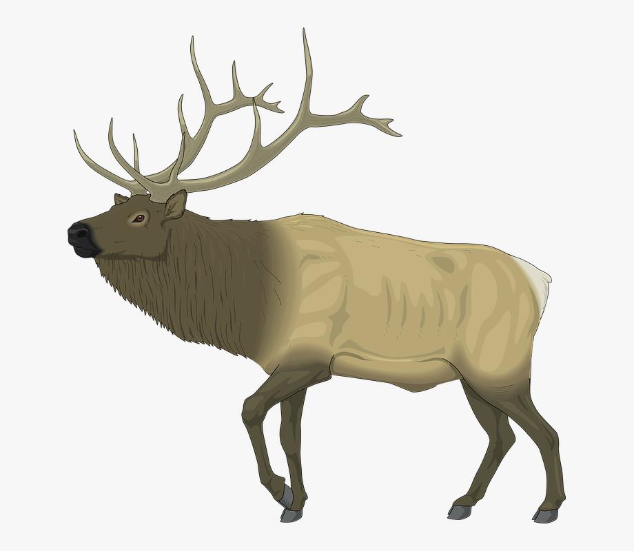 Horns antler clip art. Moose clipart elk