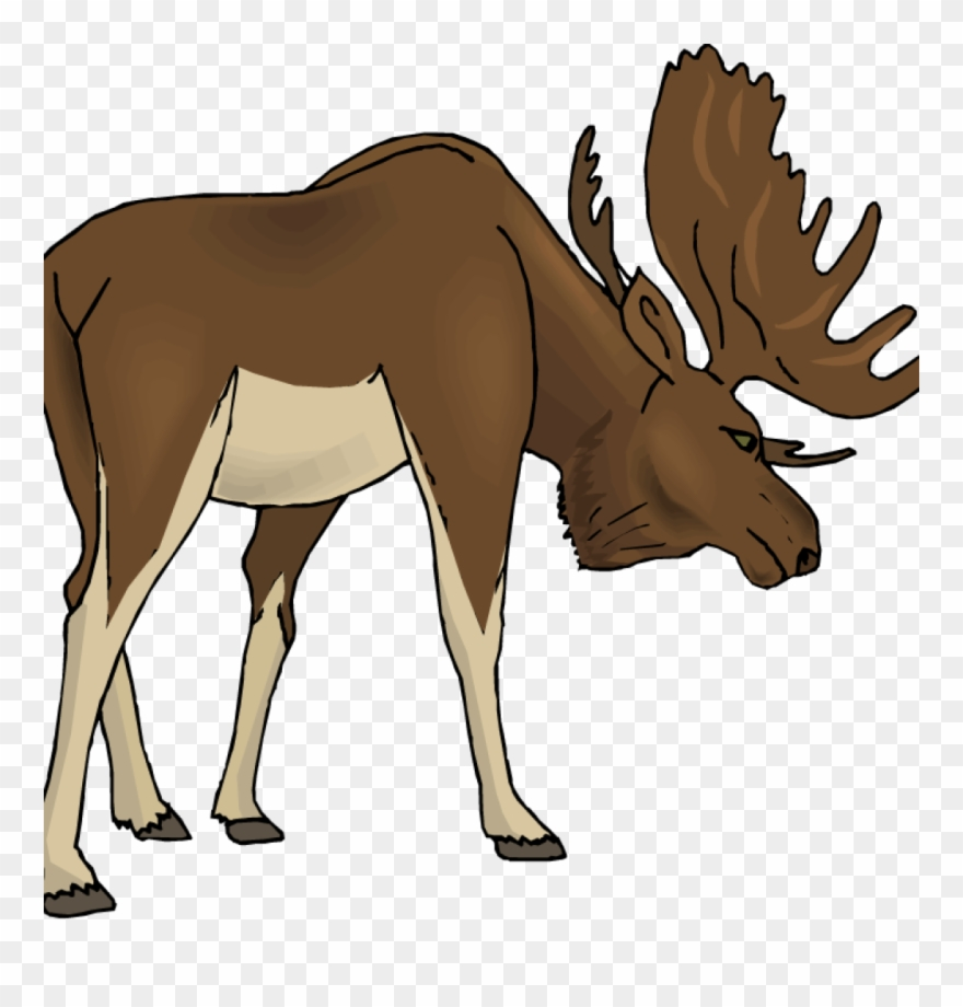 Moose clipart illustration. Free money illustrations