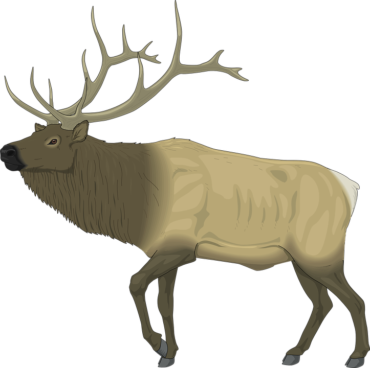 Pictures bdfjade computer wallpapers. Moose clipart moose hunting