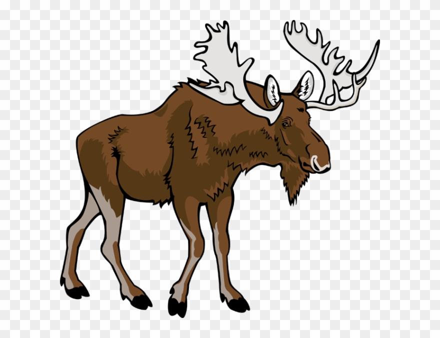 Clip art png transparent. Moose clipart moose hunting