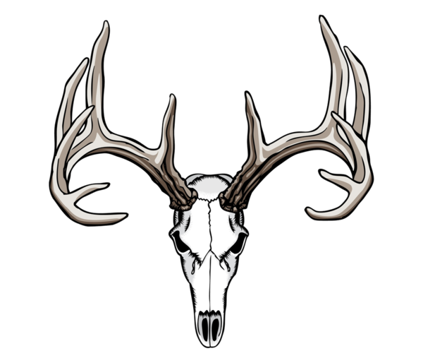 White tailed deer drawing. Moose clipart skull