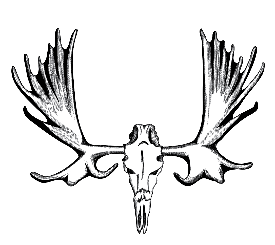 Moose clipart skull. Black and white free