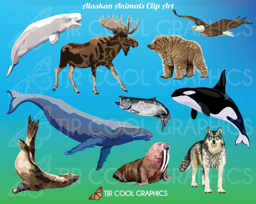 Illustration wolf fish dolphin. Moose clipart wildlife alaska