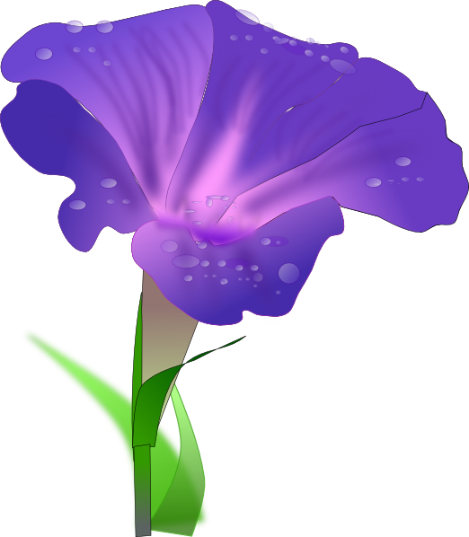 Morning glory clip art. Iris flower png