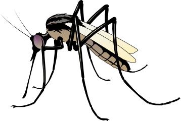 Mosquito clipart. No more