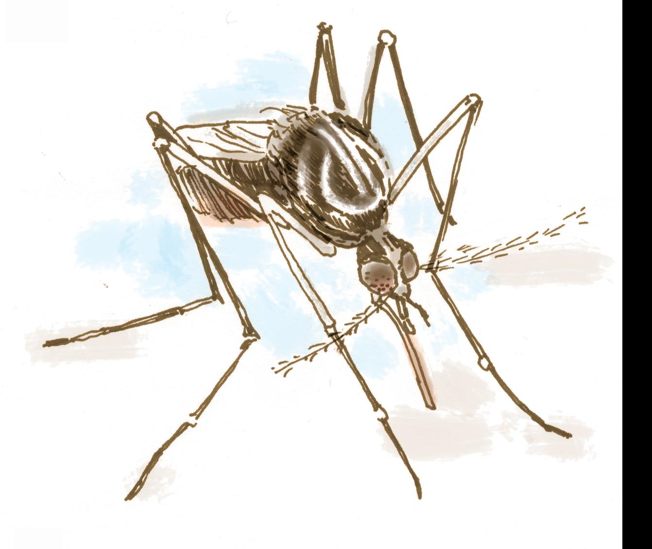 Mosquito clipart chikungunya. Could this bring zika