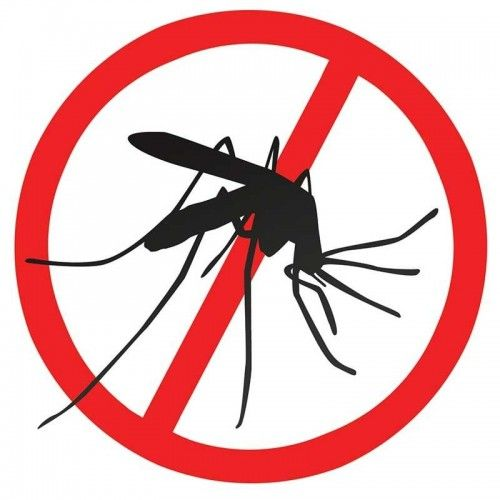 Mosquito clipart dengue mosquito. Danger of fever in
