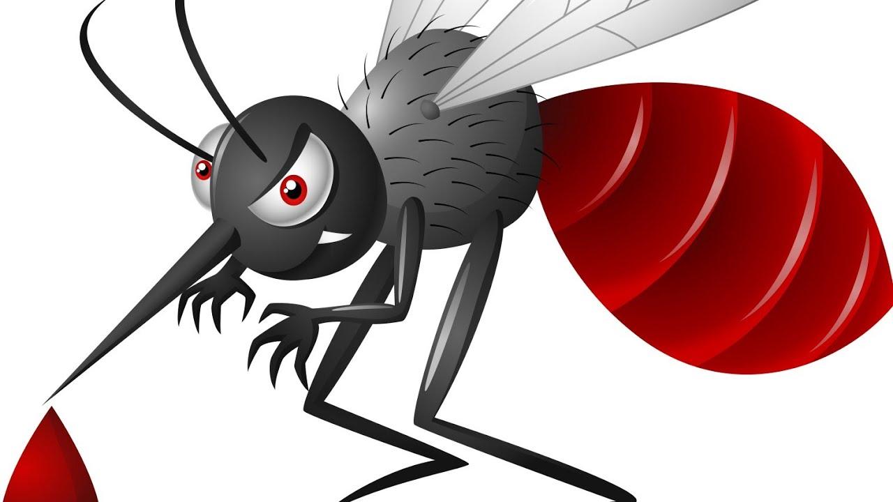 Documentary film on . Mosquito clipart dengue mosquito