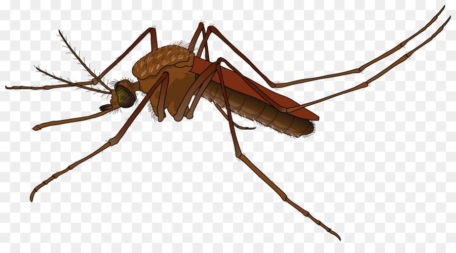 Cartoon wing transparent clip. Mosquito clipart female mosquito