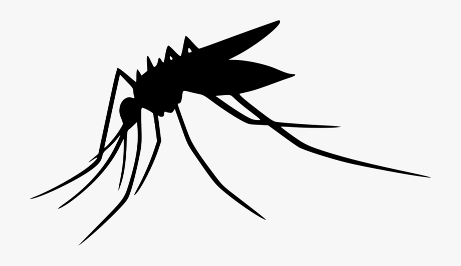 mosquito clipart kid