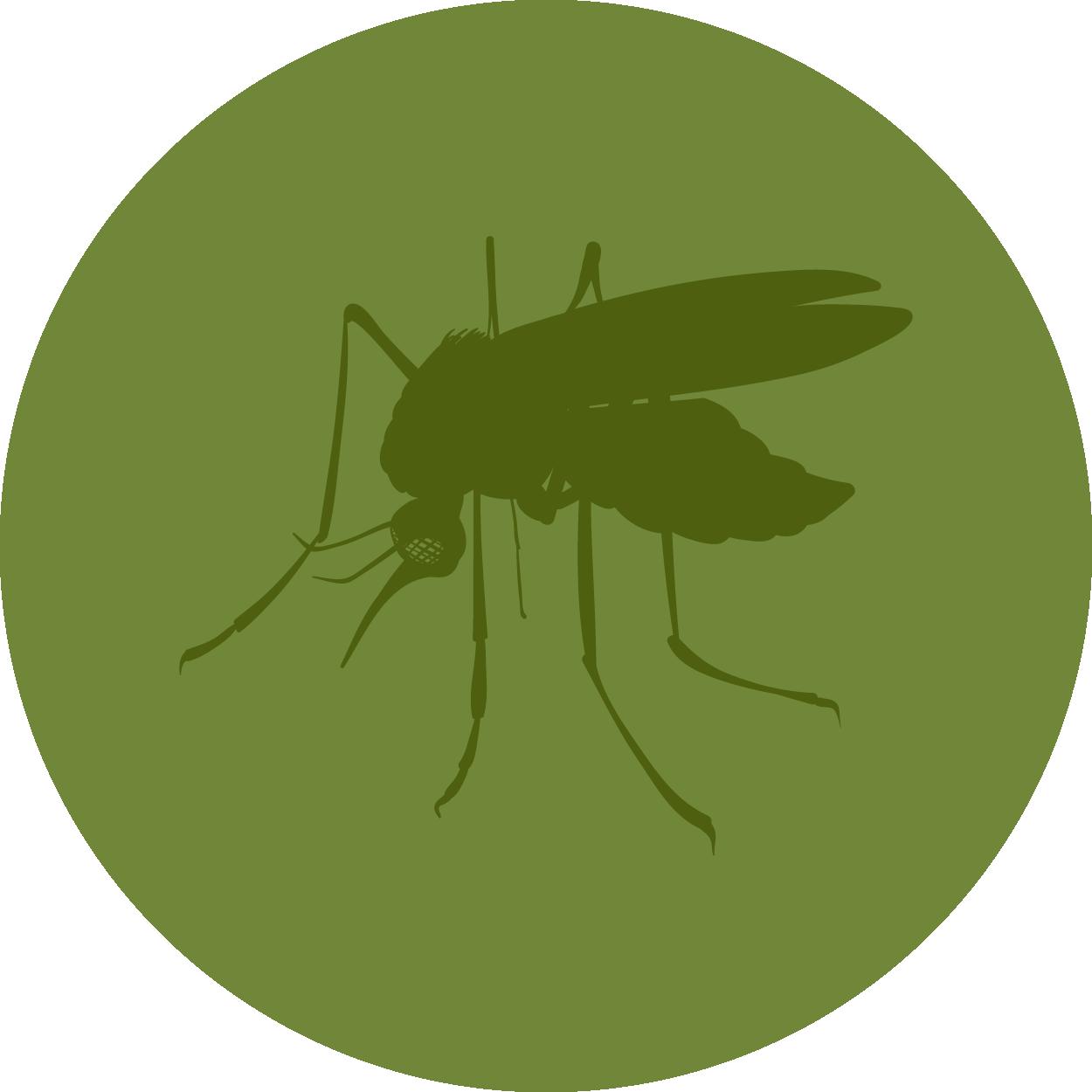 Mosquito clipart mosquito breeding. Control atlanta breda pest
