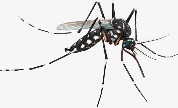 Mosquito clipart realistic. Pin on dengue fever
