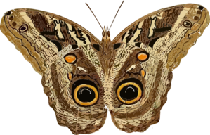 Moth clipart. Clip art at clker