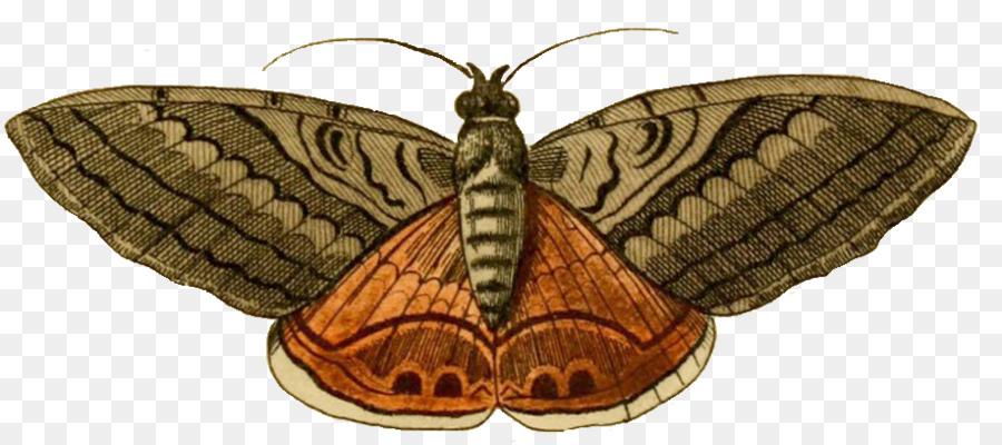 Moth clipart. Luna butterfly clip art