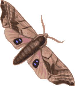 Clip art at clker. Moth clipart