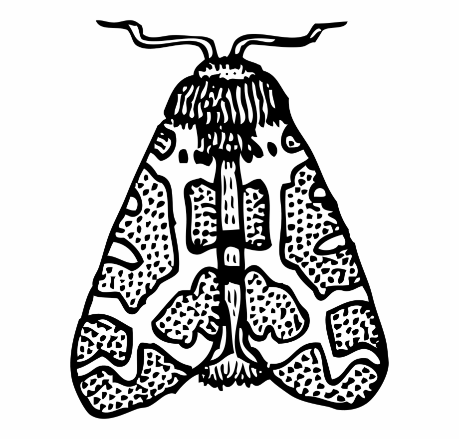 Moth clipart black and white. Transparent png download for
