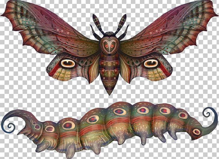 Moth clipart botanical illustration. Butterfly insect drawing png