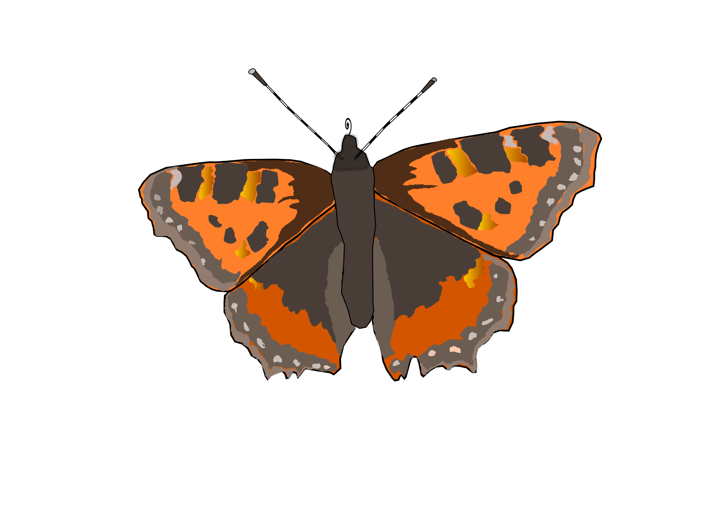 Butterfly. Moth clipart buttefly