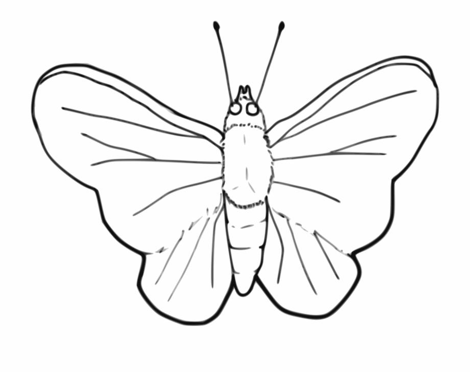 Stroke drawing butterfly black. Moth clipart butterflyblack