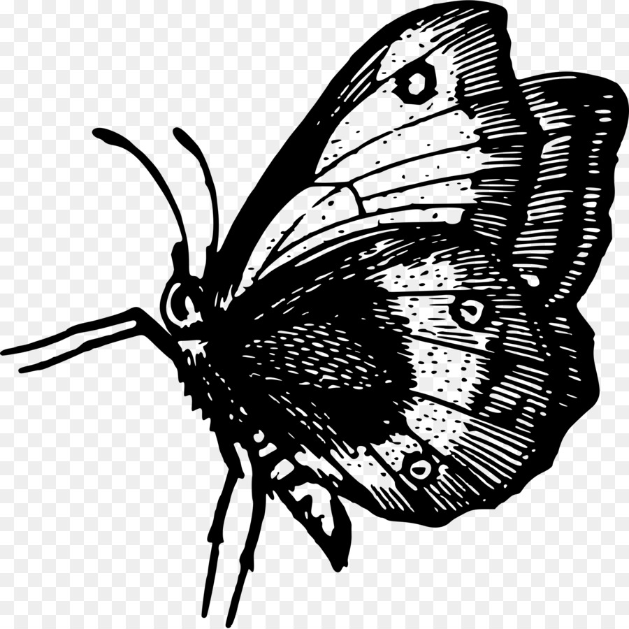 Moth clipart butterflyblack. Butterfly black and white