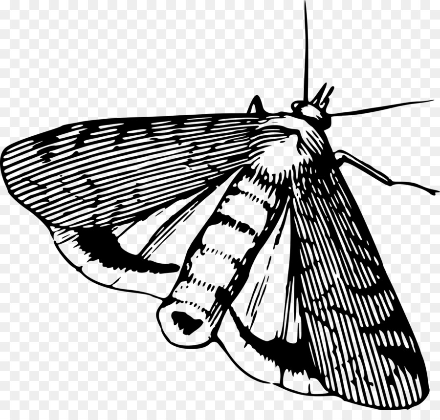 Butterfly black and white. Moth clipart butterflyblack