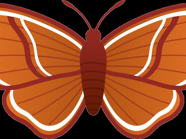 Moth clipart clip art.  huge freebie download