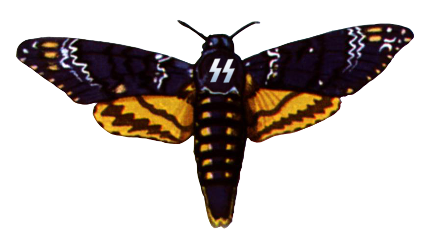 Moth clipart death's head. Deathheadhawkmoth explore on deviantart