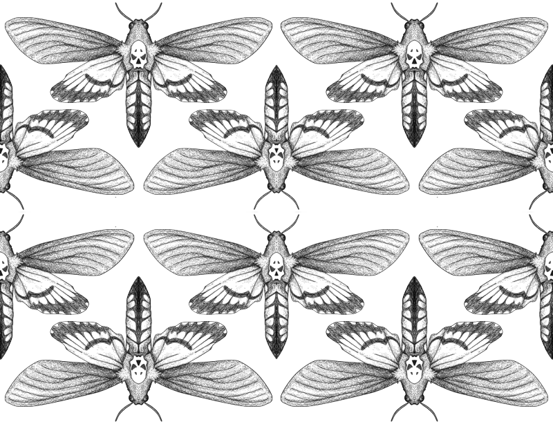Death s wallpaper the. Moth clipart death's head