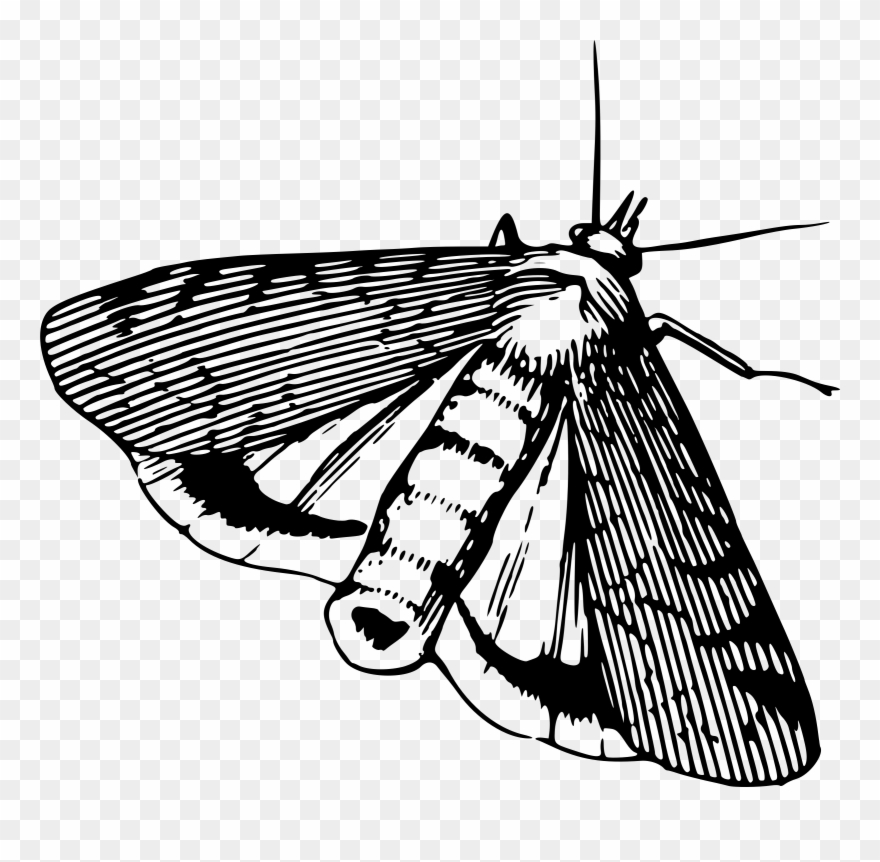 Big image black and. Moth clipart insect
