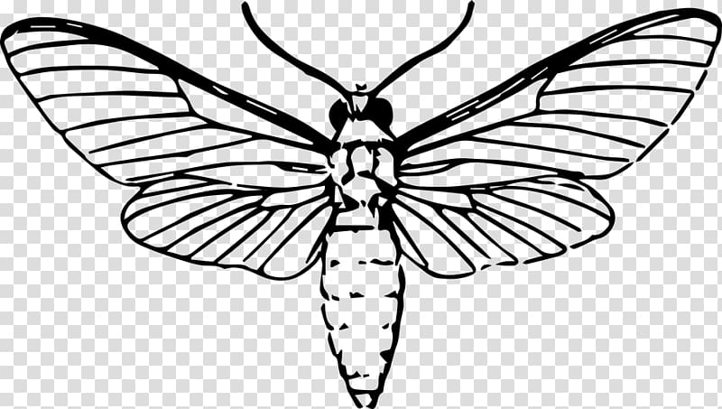Moth clipart insect. Butterfly drawing animal dragonfly