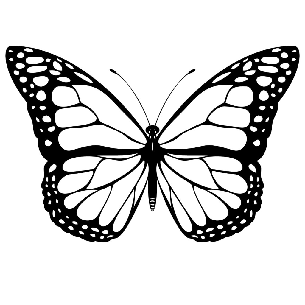 Constantine primary school . Moth clipart line drawing