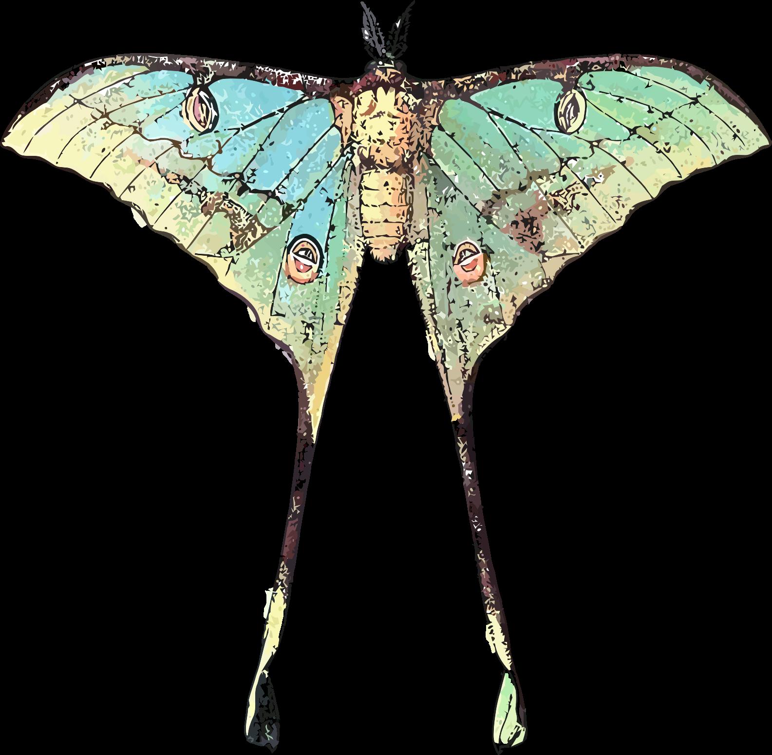Moth clipart luna moth. Actias selene icons png