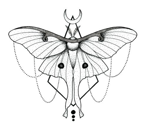 Drawing at paintingvalley com. Moth clipart luna moth