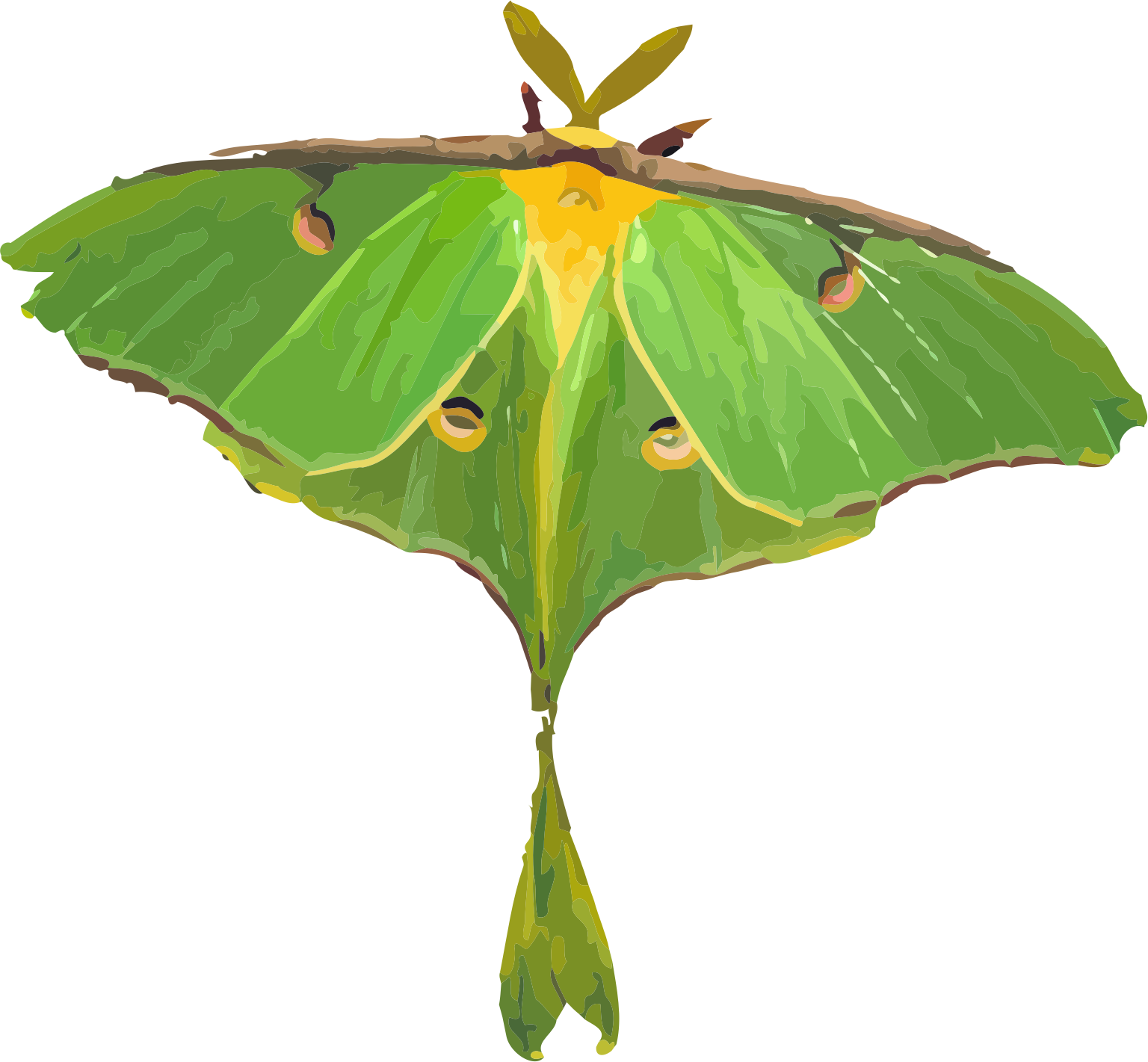 Actias big image png. Moth clipart luna moth
