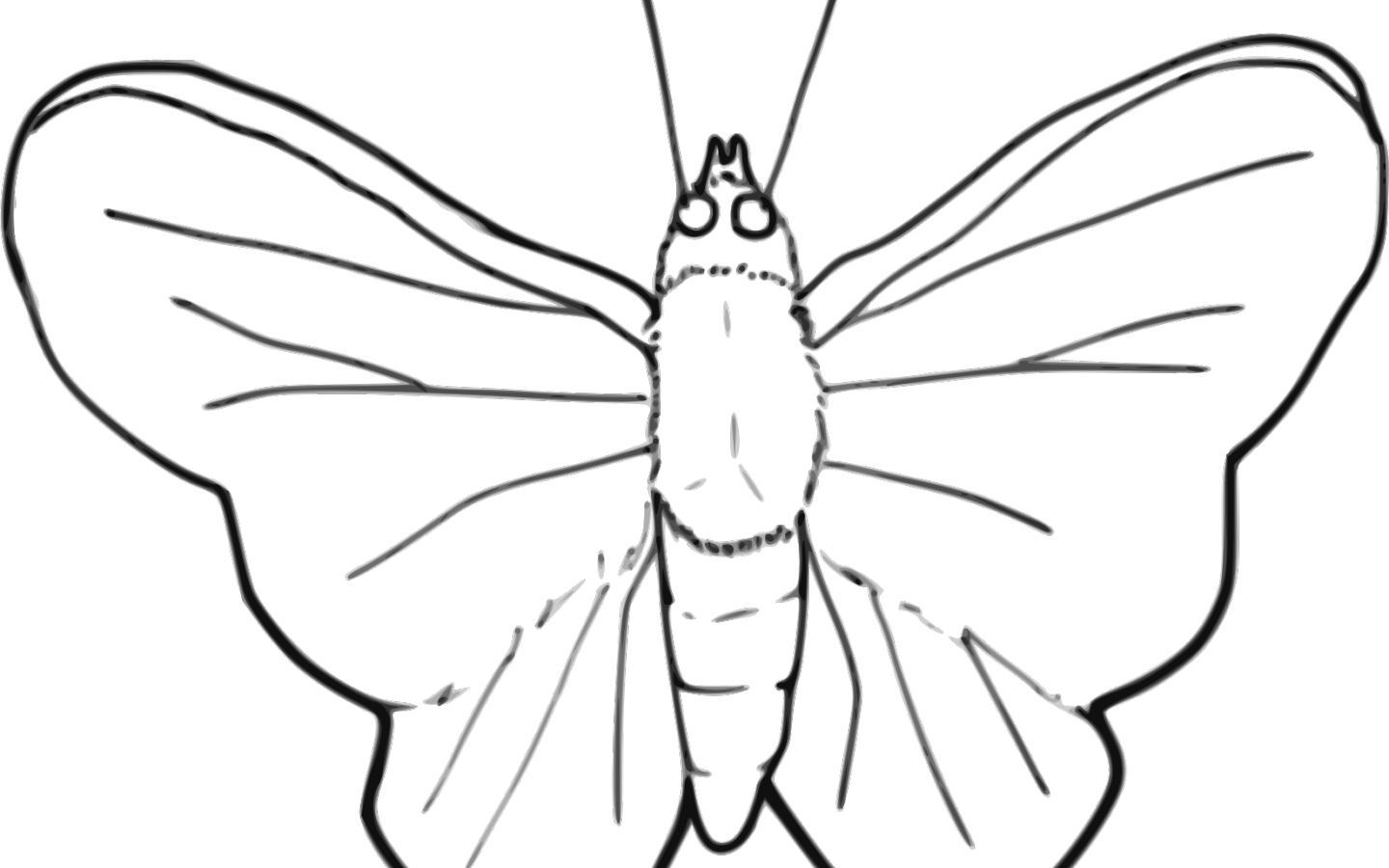 Moth clipart outline. Butterfly x carwad net