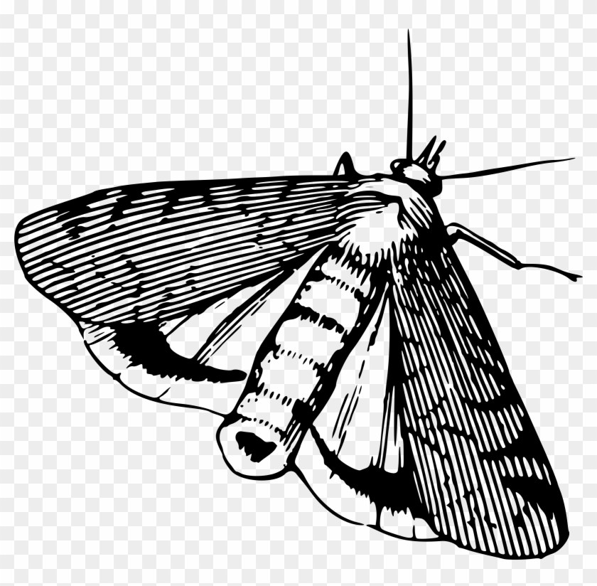 Moth clipart outline. Black and white portal