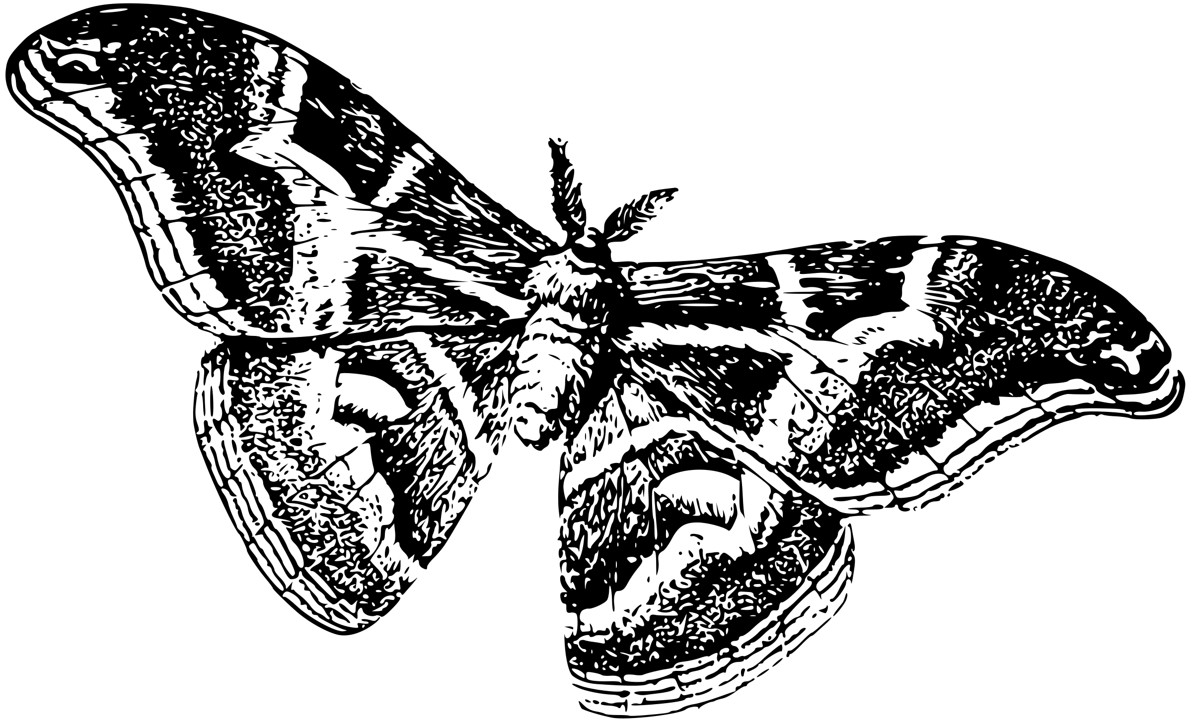Worm clipart silkworm. As a moth icons