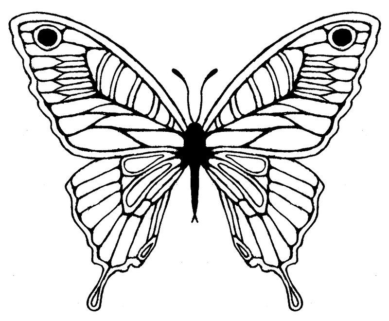 Butterfly wing drawing best. Moth clipart sketch