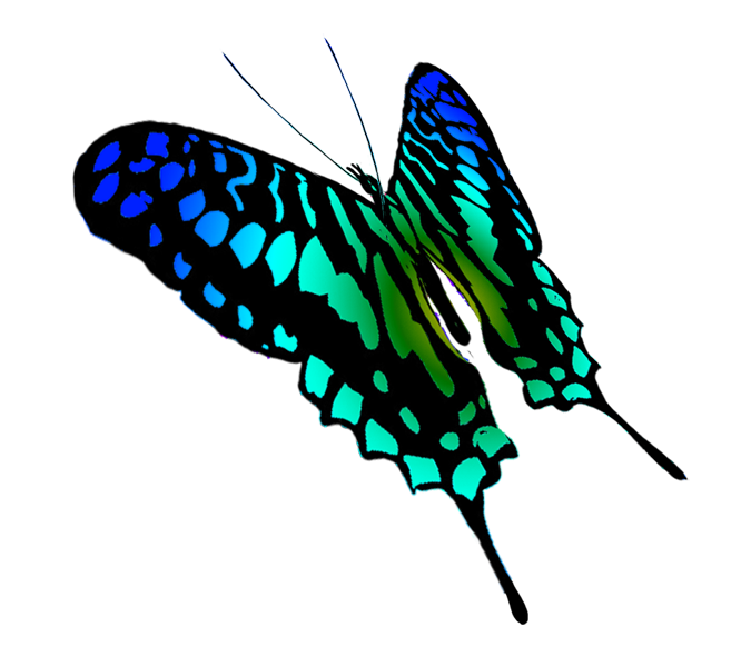 Moth clipart sketch. Butterfly drawing of swallowtail