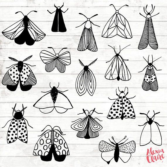Moth clipart sketch. Doodle hand drawn moths