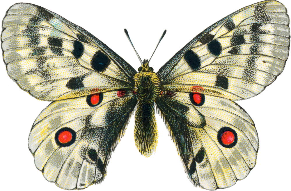 Moth clipart transparent. Download png free images