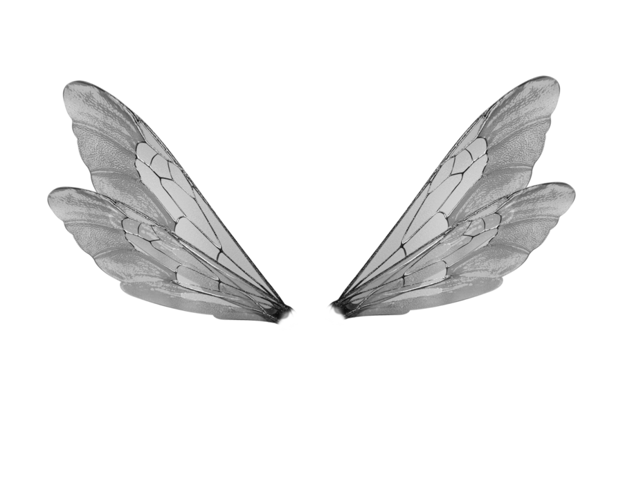 Wings shared by gin. Moth clipart transparent tumblr