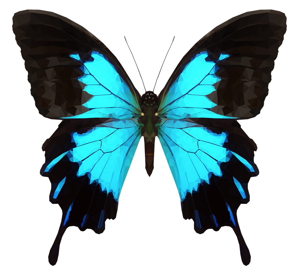 Butterfly google search story. Moth clipart transparent tumblr